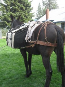 Conventional Panniers2